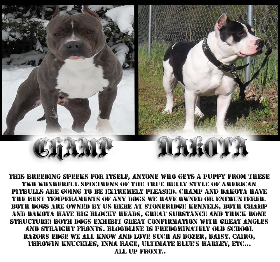 Game Bred Pitbulls For Sale In Mississippi free download programs